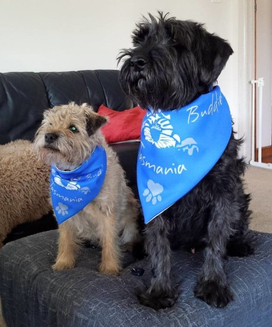 Bridie_Remmie_puppy_animal_love_bandana_dog_canine_pets_groom_schnauzer